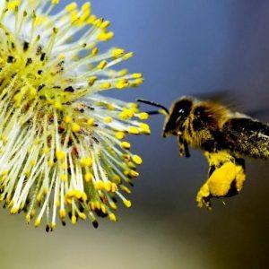 Producten van Bijen